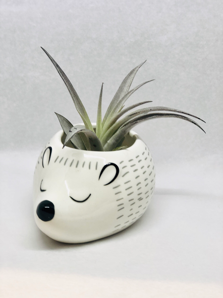 Porcupine/Hedgehog Pot