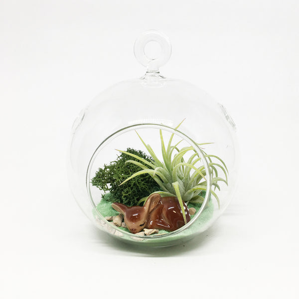 Deer Sleeping Air Plant Terrarium Kit