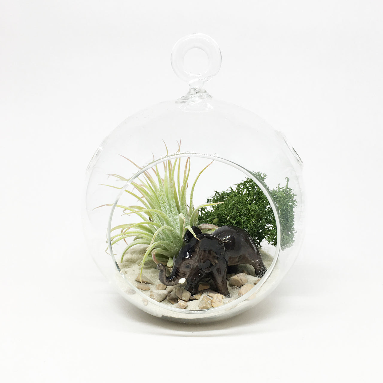 Elephant Air Plant Terrarium Kit