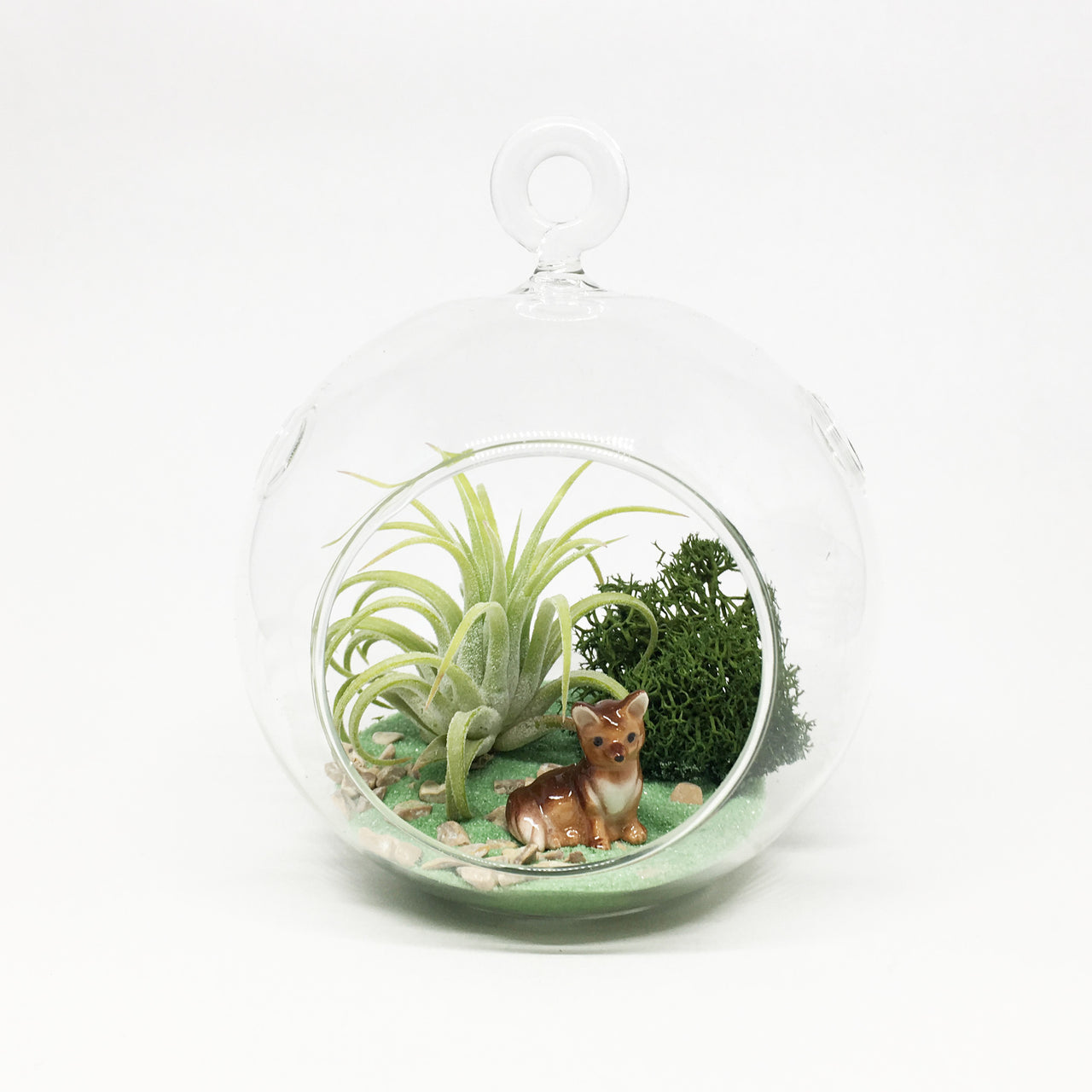 Fox Air Plant Terrarium Kit