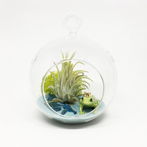 Frog Prince Air Plant Terrarium Kit
