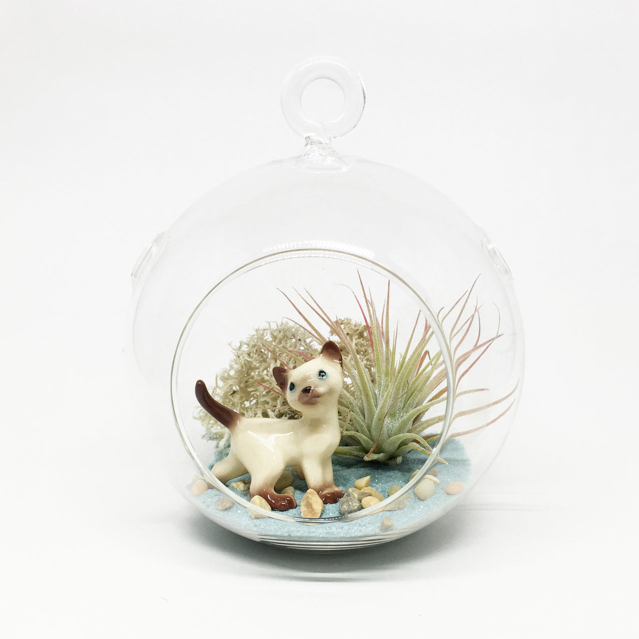 Kitty Air Plant Terrarium Kit