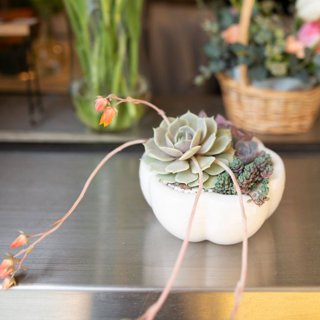 Mother's Day Succulent Petal Arrangement Workshop