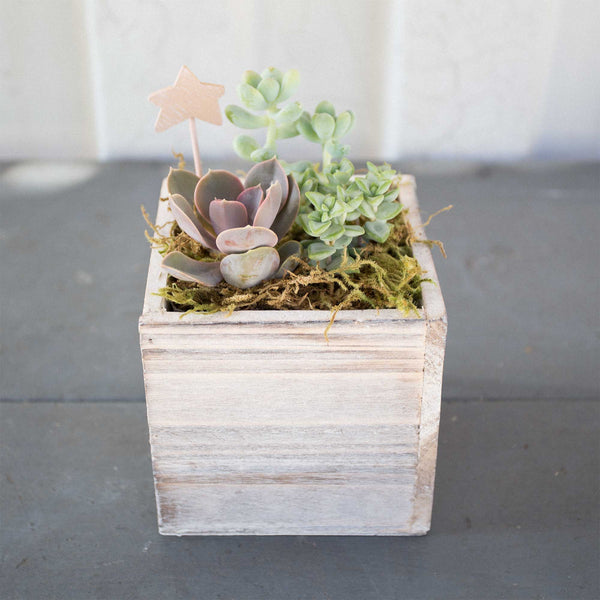 Small Succulent Wood Box Planter