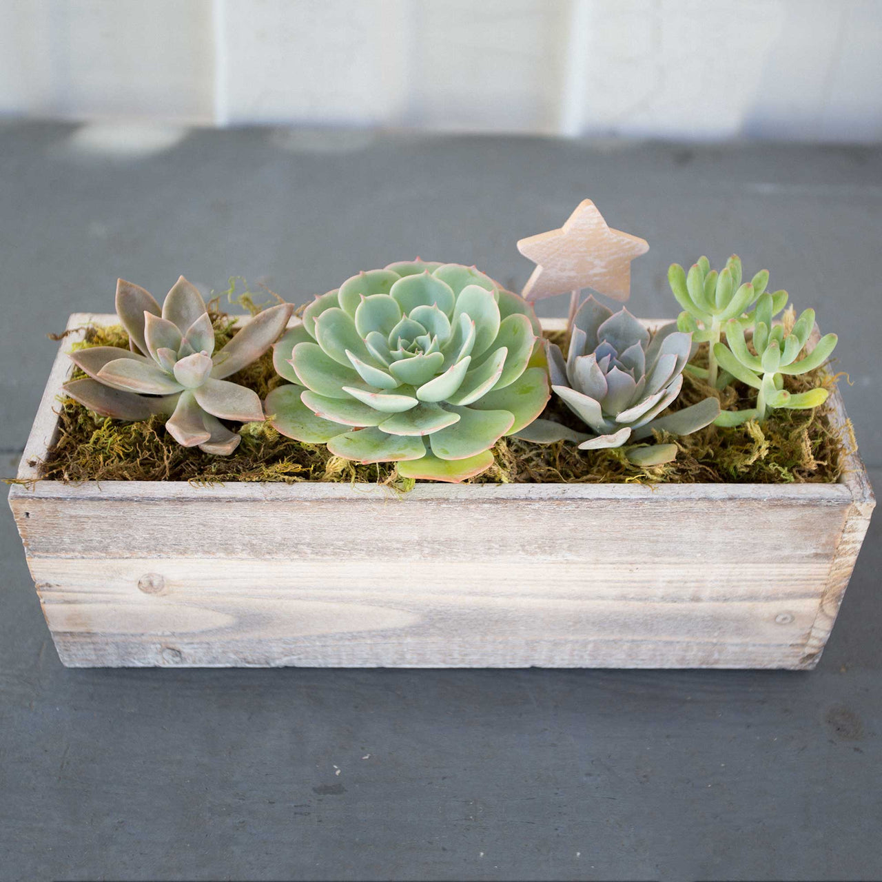 Large Succulent Wood Box Planter