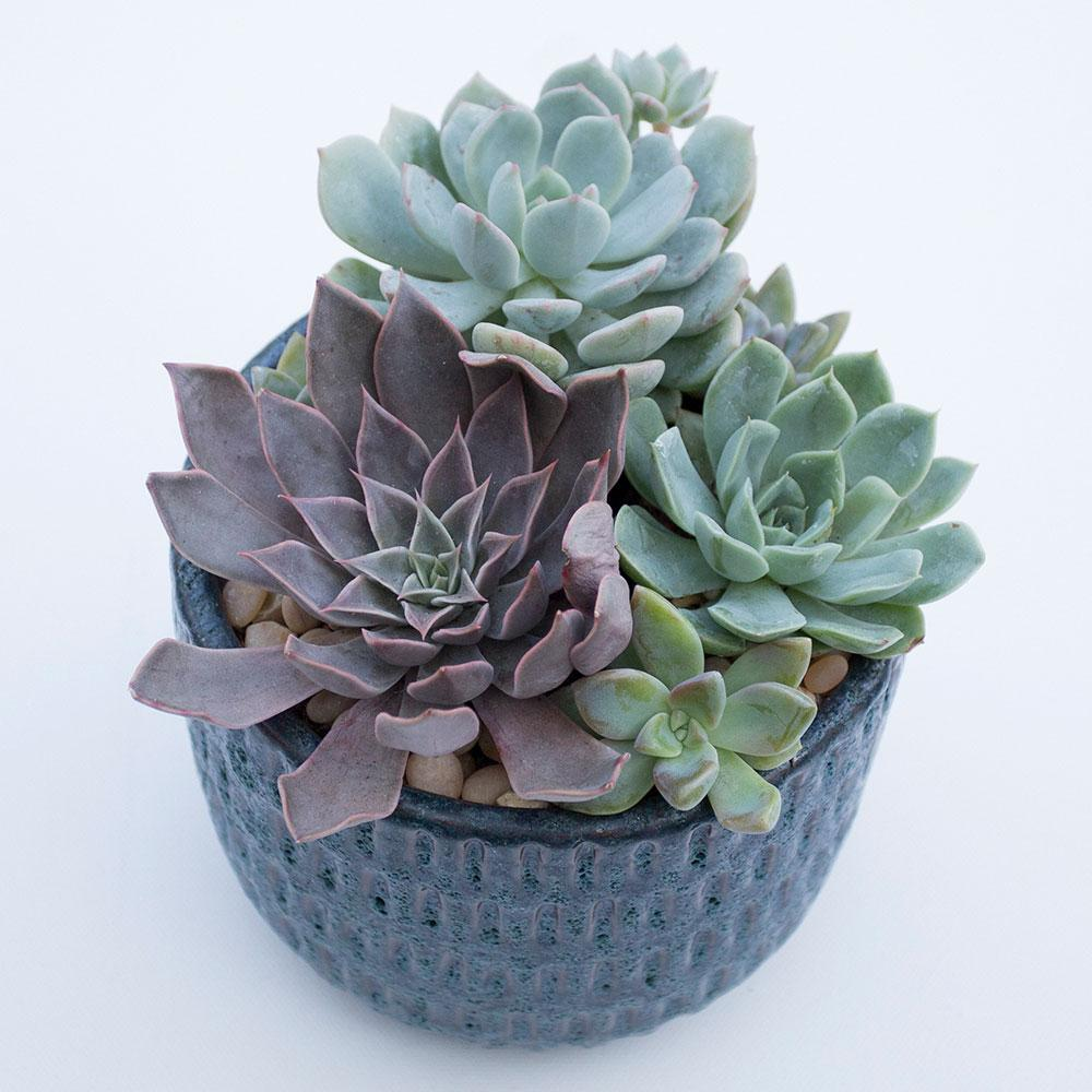 Succulent Arrangement Blue Ceramic