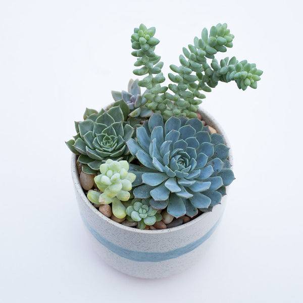 Succulent Arrangement Adobe Pot