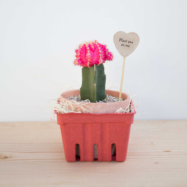 Valentine's Moon Cactus Love Note