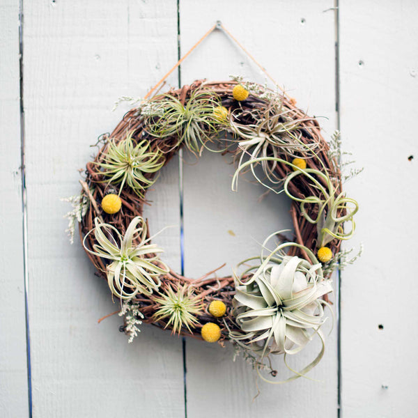 Living Air Plant Wreath