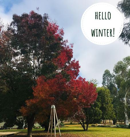 Winter at Woolerina