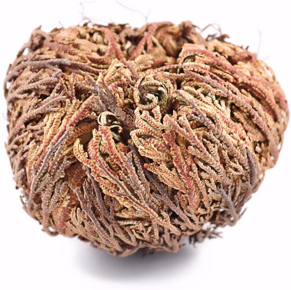 Rose of Jericho Flower Bundle