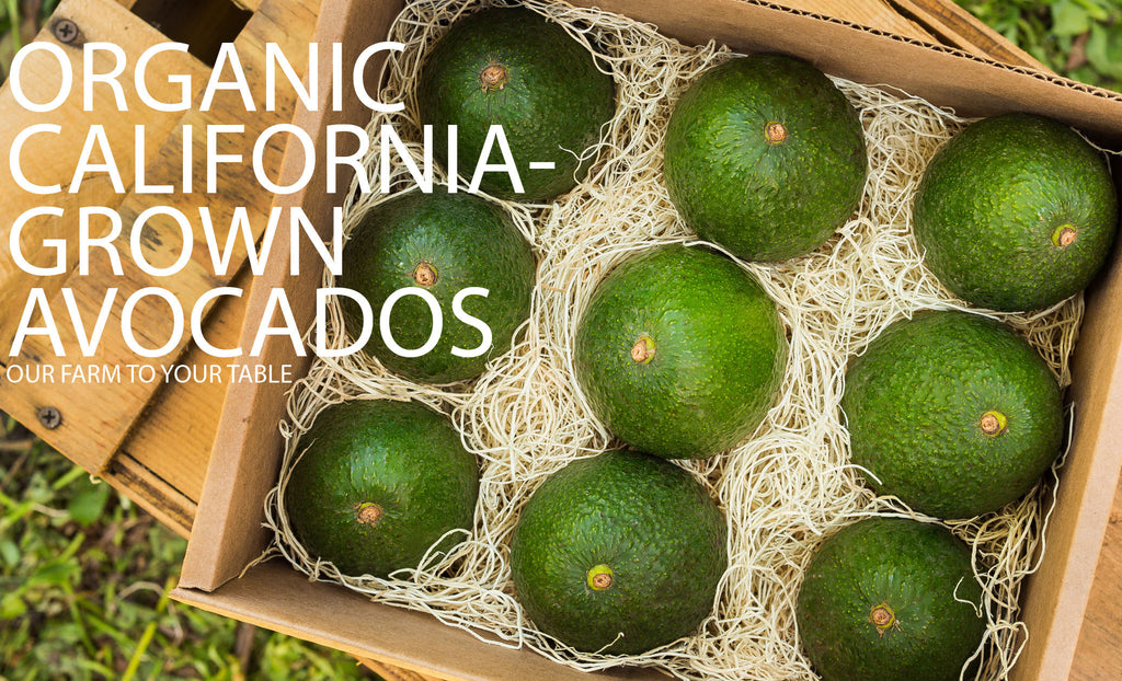 california avocados, organic avocados, organic avocado, Shop for Organic California Avocados at AvocadoOrganic.com