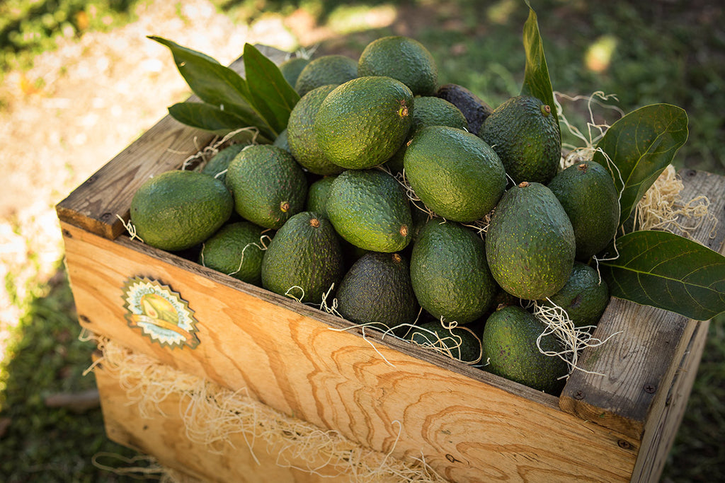 Premium Avocado Subscription Extended