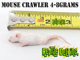 Mouse Crawler