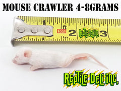 Mouse - Crawler