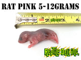 Rat - Pinks