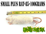 Small Rat Plus