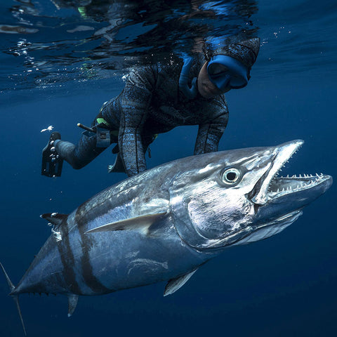Peter Correale spearfishing