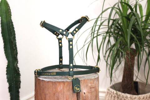 THE PARADISO HARNESS