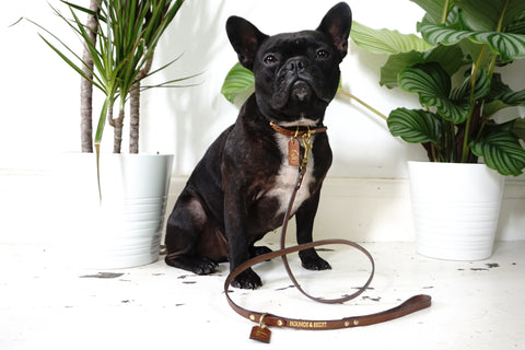 THE SORRENTO LEASH