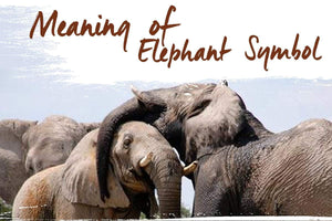 The Meaning of Different Elephant Symbols