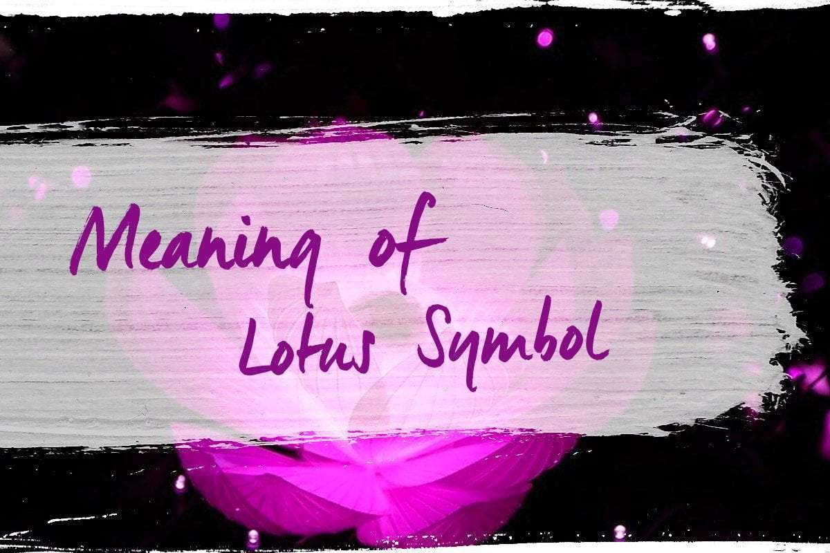 Meaning Of Lotus Flower One Tribe Apparel