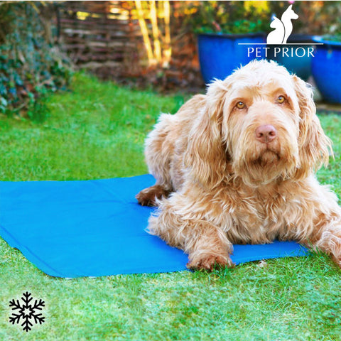 Pet Prior Refreshing Pet Mat (65 x 50 cm)-Universal Store London™