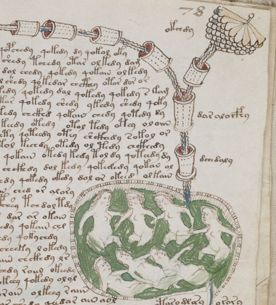 "A detail from the ""biological"" section of the manuscript"