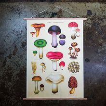 Load image into Gallery viewer, Mushrooms Chart Print