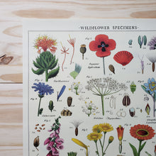 Load image into Gallery viewer, Wildflower Specimens Poster
