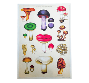 Mushrooms Chart Print