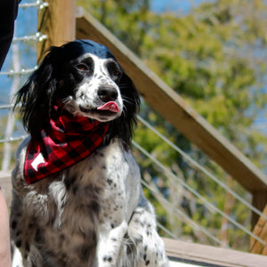 Minnesota plaid dog bandana