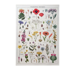 Wildflower Specimens Poster