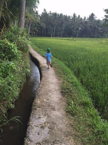 Tanner running thru rice fields in Ubud ( no pebble tiles out here)
