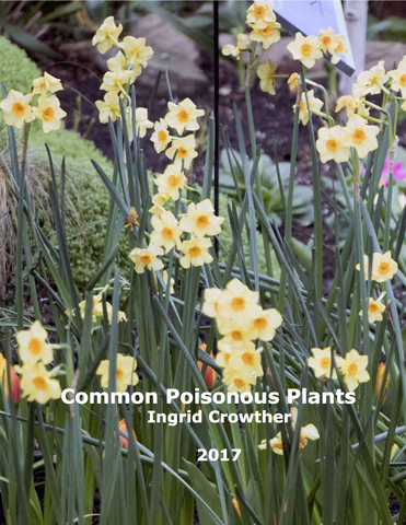 Common Poisonous Plants