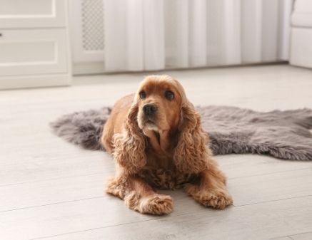 The Best Hardwood Flooring Options for Homes With Dogs
