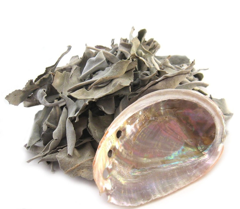 Loose White Sage With Mini Abalone Shell Smudge Kit