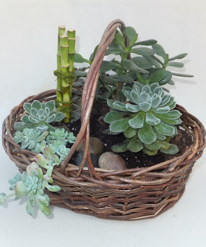 Mixed Succulent Basket