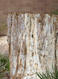 Petrified Wood Stump 471