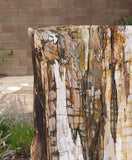 Petrified Wood Stump 486