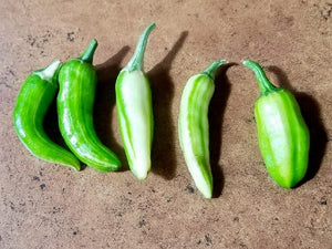 Gindo's Green Fish Pepper
