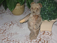 Antique 1949 Steiff Original Teddy Bear Jointed Gray Mohair 35 cm