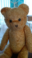 Old Antique English UK Yellow Teddy Bear Glass Eyes Working Squeaker Wood Fibers