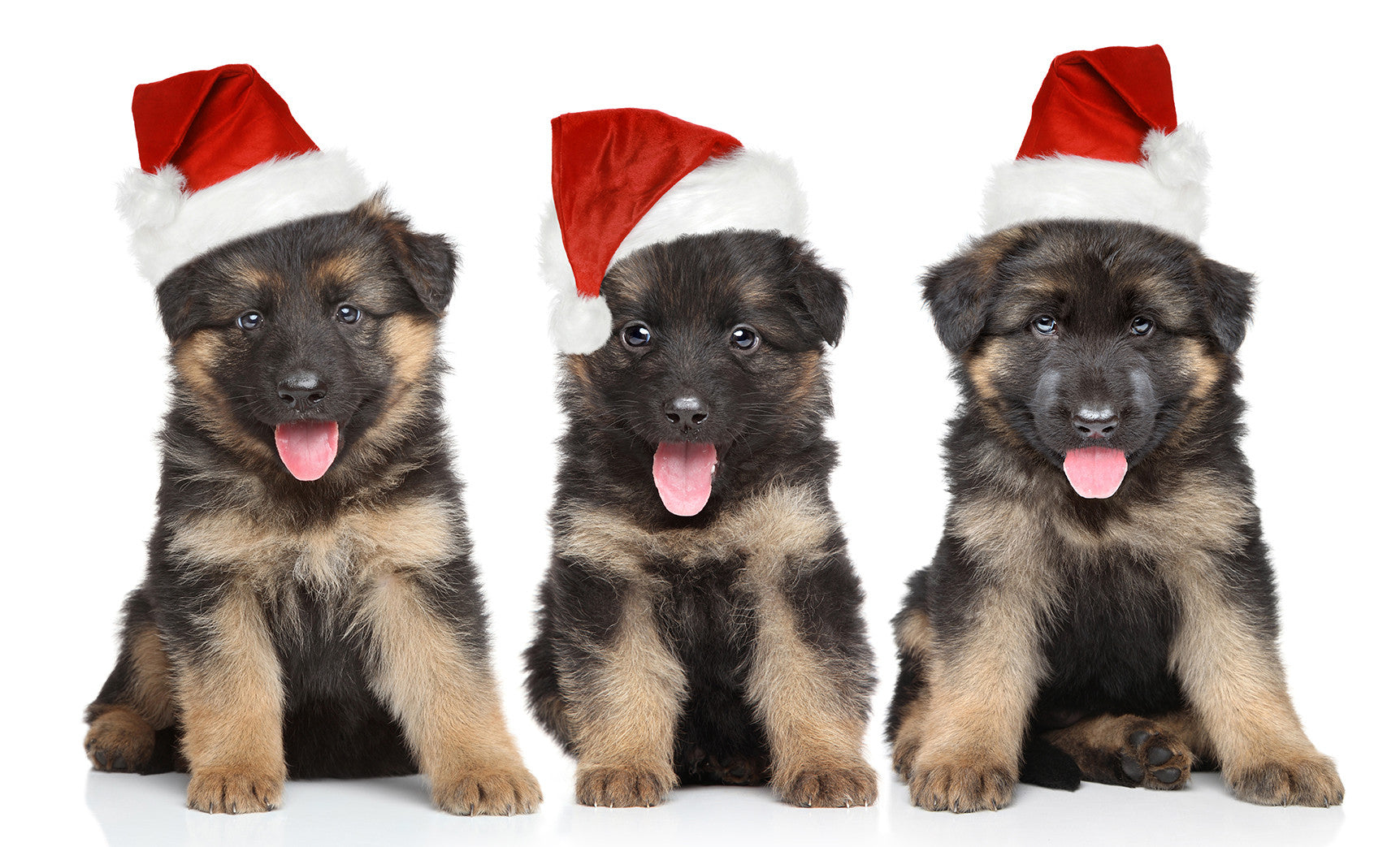 The Essential Guide to Getting a Christmas Puppy