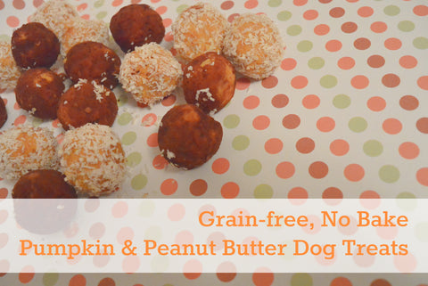 No Bake Peanut Butter & Pumpkin Grain-Free Treats from Kol's Notes