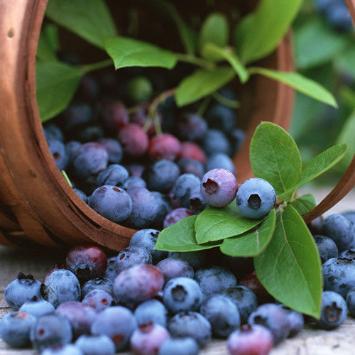 Blueberry (Wild) - Dark Balsamic Vinegar
