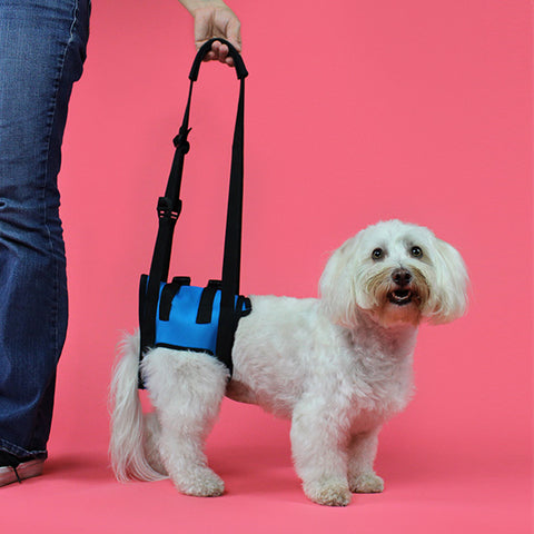 Lift 'Em Up Harness, Rear