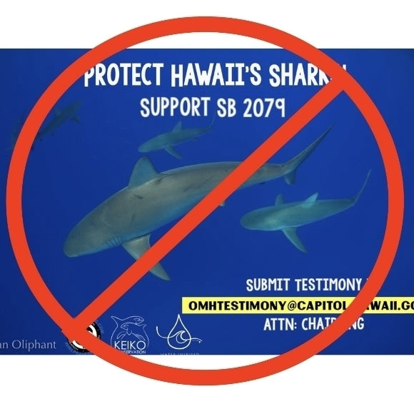 Legislator Kills Shark And Ray Bill For The Year