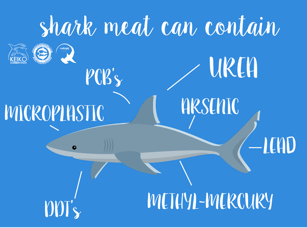 The Dangers Of Eating Shark Meat