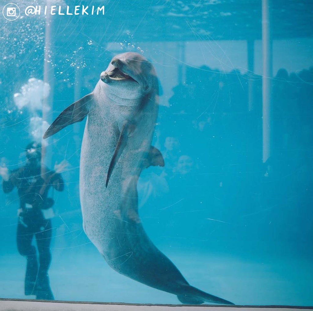 Japanese Dolphinariums 101: Okinawa Churaumi Aquarium
